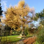 Autumn in the lower garden